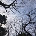 晴れた日の冬の木