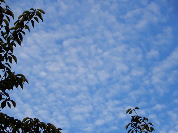 2018.9.19 巻層雲(うろこ雲)