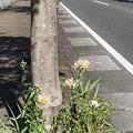 2020.9.29 街路樹花壇2