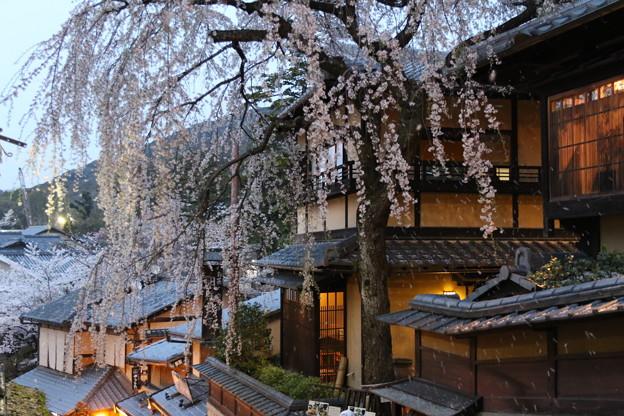 三年坂の枝垂れ桜