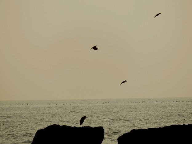 海岸の鳥さん