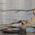 Photos: 流木で休憩