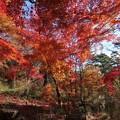 再度公園の紅葉