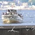 Photos: コアジサシと漁船