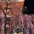 写真: 宝蔵門と枝垂れ桜