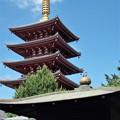 写真: 五重塔と雀