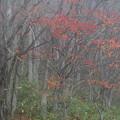 写真: 霧の中の紅葉