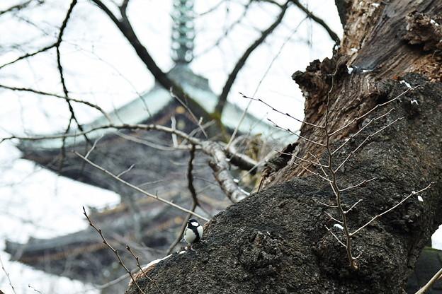 写真: 上野の五重塔