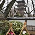 写真: 上野牡丹園