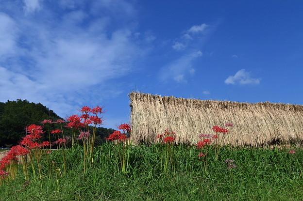 寺坂の棚田