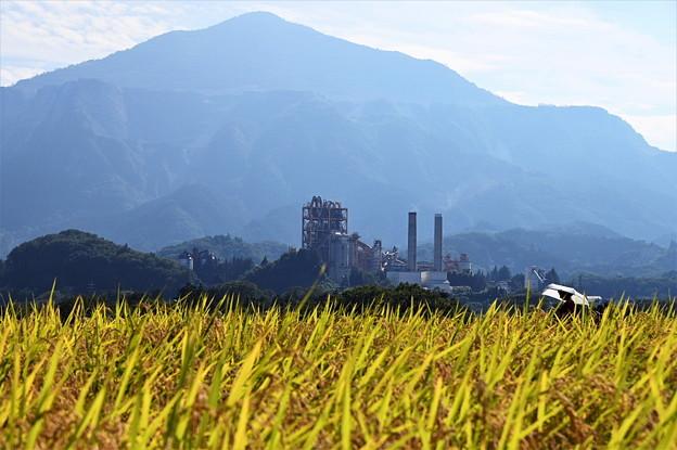 武甲山と稲穂