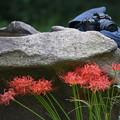 Photos: 石の上に。。。