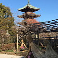 Photos: 上野ぼたん園