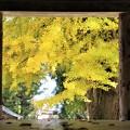 新宮熊野神社 紅葉