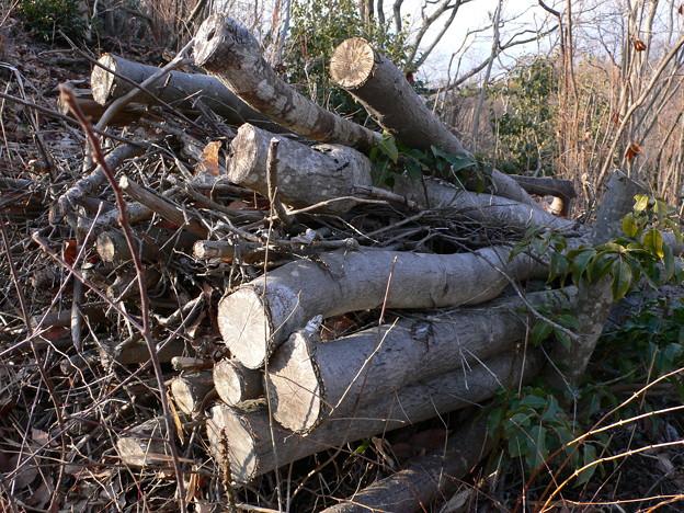 間伐材の束