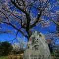 写真: 桜塚  茨城県日立市
