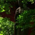 写真: 保和苑  ぴんころ地蔵さん