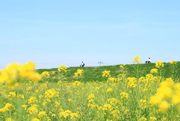 945 久慈川サイクリングコース
