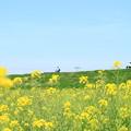 写真: 945 久慈川サイクリングコース
