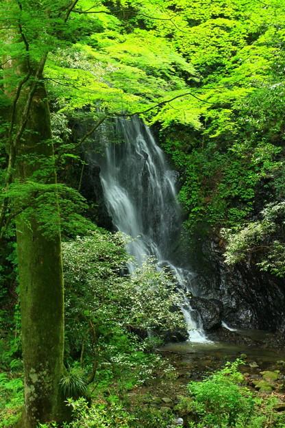 Photos: 585 玉簾の滝 日立市