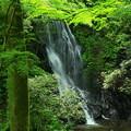写真: 490 玉簾の滝 日立市