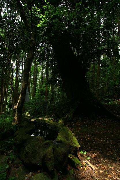 Photos: 492 日月神社