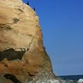 写真: グミ島の鵜