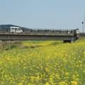 写真: 里川の菜の花畑 常陸太田