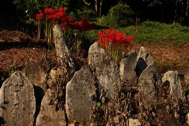 Photos: 650 平沢の石仏群