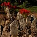 写真: 545 平沢の石仏群
