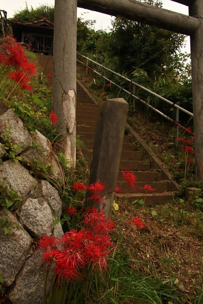 Photos: 695 坊崎の天王様