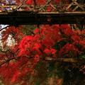 写真: 475 中里の吊り橋