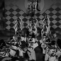 阿波おどり のんき連 郷土芸能大祭2