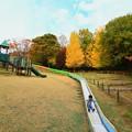144 十王パノラマ公園 ローラー滑り台