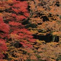写真: 462 入四間の稲荷神社