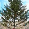 912 茨キリのクリスマスツリー