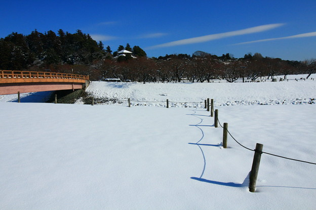 写真: 偕楽園・四季の原 ~冬