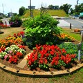 Photos: 79 荒地町の花壇