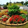 79 荒地町の花壇