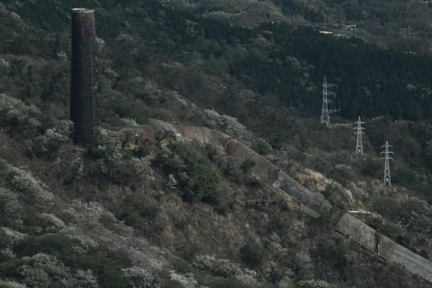 362 大煙突と大島桜 ある町の高い煙突