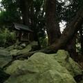 314 天王様の石抱き桜