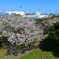 Photos: 938 日立港 なぎさ公園
