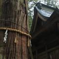 鉾杉 近津神社