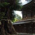 安良川八幡宮 爺杉