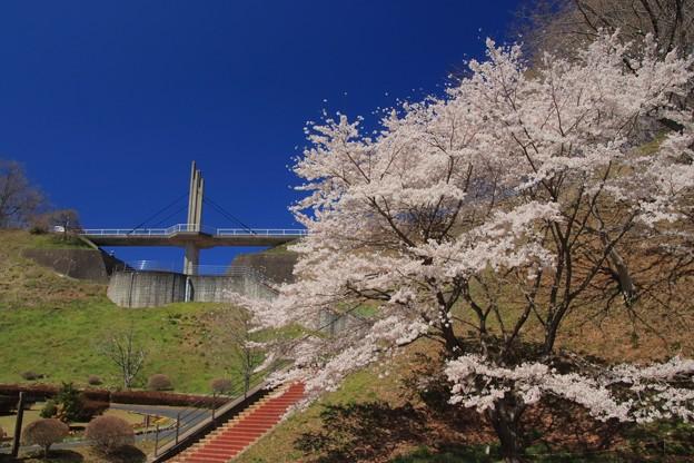 Photos: 404 きららの里 ときめき橋