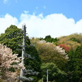 549 中里の樹木型アンテナ 日立市