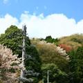 Photos: 549 中里の樹木型アンテナ 日立市