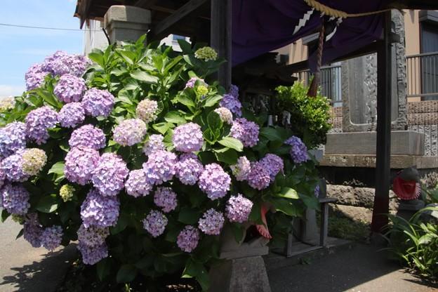 534 若葉町の稲荷神社
