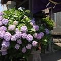 Photos: 641 若葉町の稲荷神社
