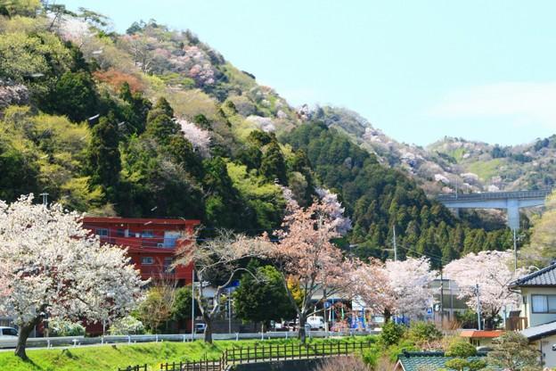 Photos: 669 諏訪の四つ峰